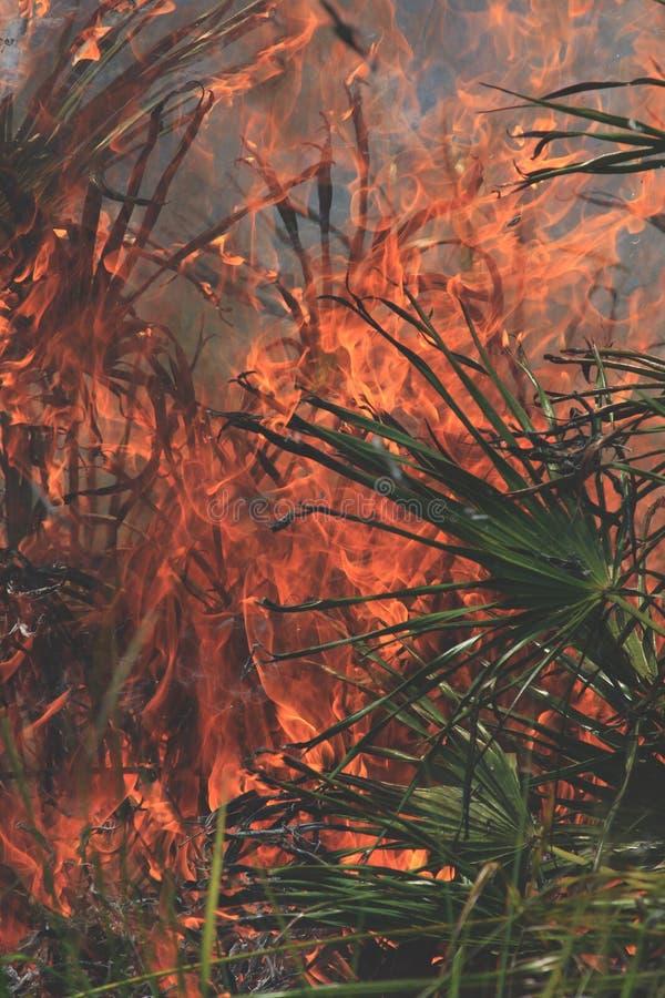 Fotos controladas de la quemadura imágenes de archivo libres de regalías