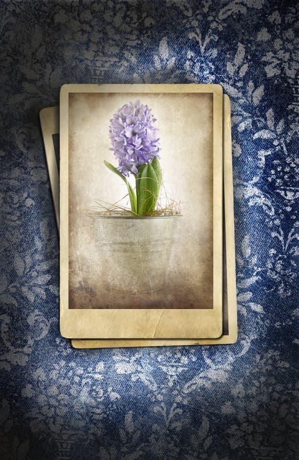 Fotos de la vendimia en fondo floral ilustración del vector