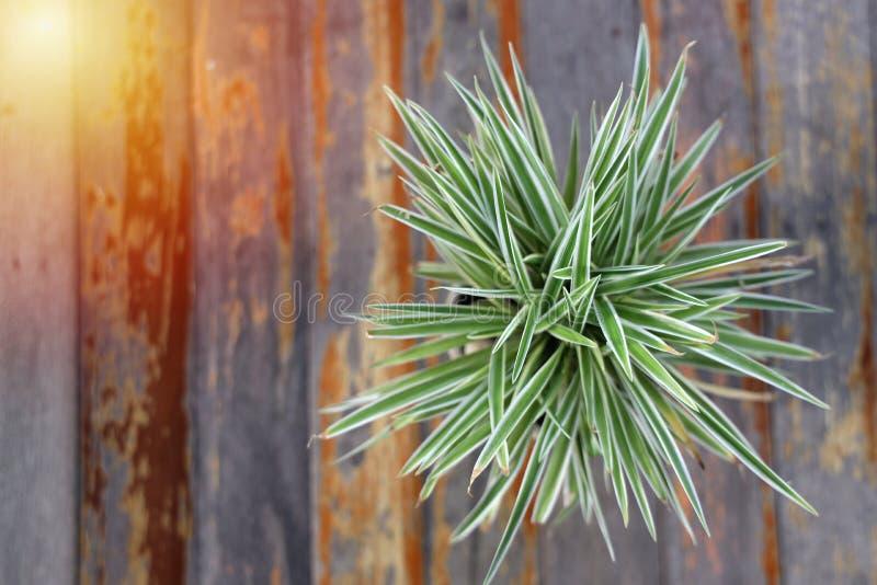 Fotos de potes de plantas de cima Em uma velha mesa de madeira Componha belas imagens fotografia de stock royalty free