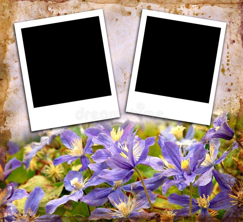 Fotos em branco foto de stock