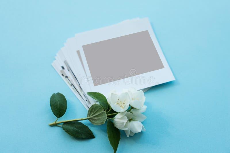 Fotos impresas, tarjetas polaroid, en un fondo azul con una flor blanca Mofa para arriba imágenes de archivo libres de regalías