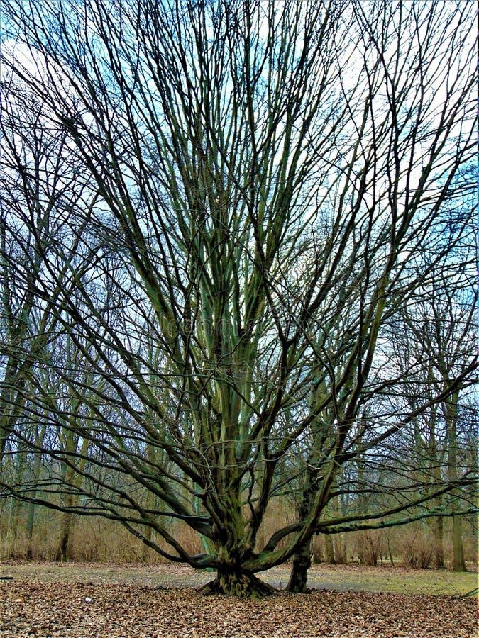 Fotos macras con el fondo marzo del paisaje los primeros días de primavera en el parque con los árboles decorativos imagen de archivo libre de regalías