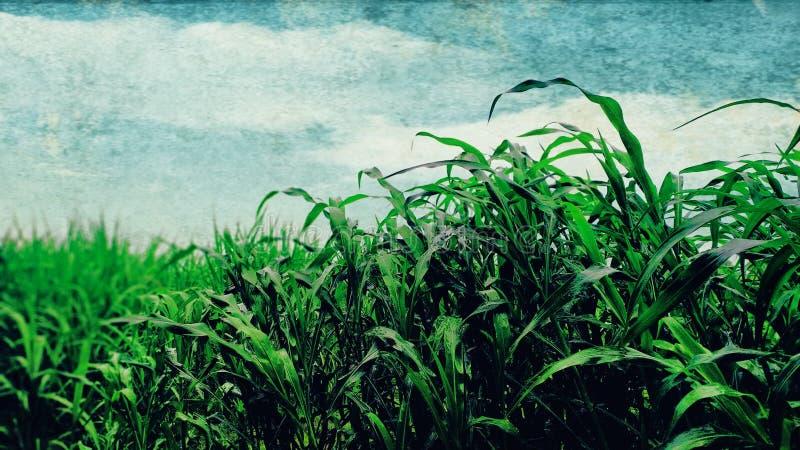 Fotos naturales de las plantas con el cielo azul fotografía de archivo