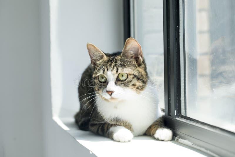 Fotos preciosas de un gato foto de archivo libre de regalías