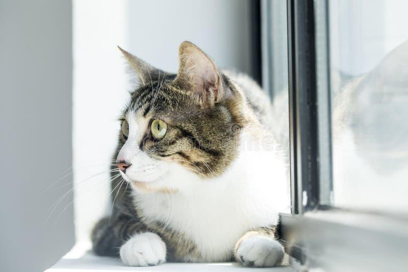 Fotos preciosas de un gato fotos de archivo libres de regalías