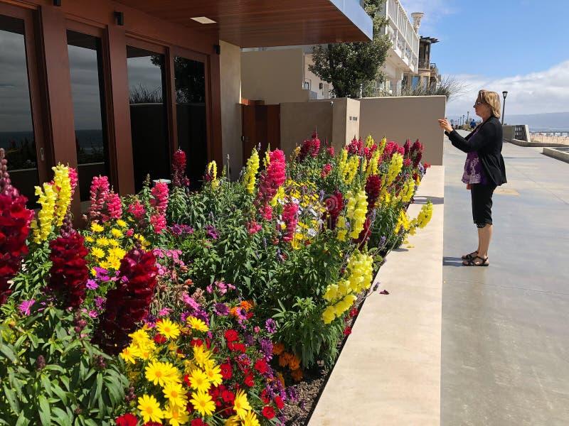 Fotos von Blumen auf dem Weg in Manhattan Beach CA lizenzfreies stockbild