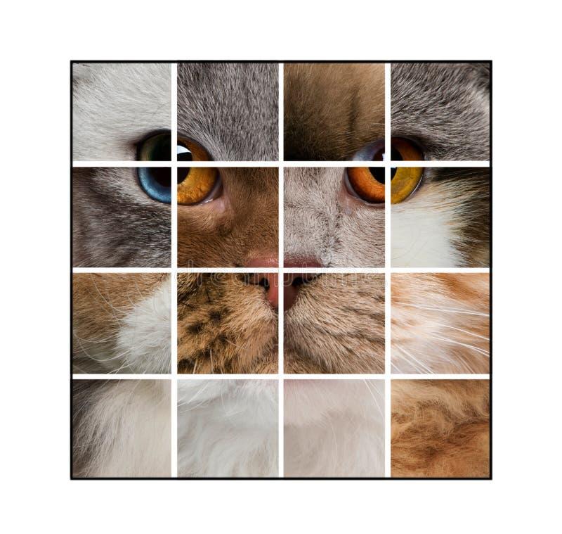 Fotosamenstelling van het hoofd van een kat met diverse katten wordt gemaakt die royalty-vrije stock fotografie