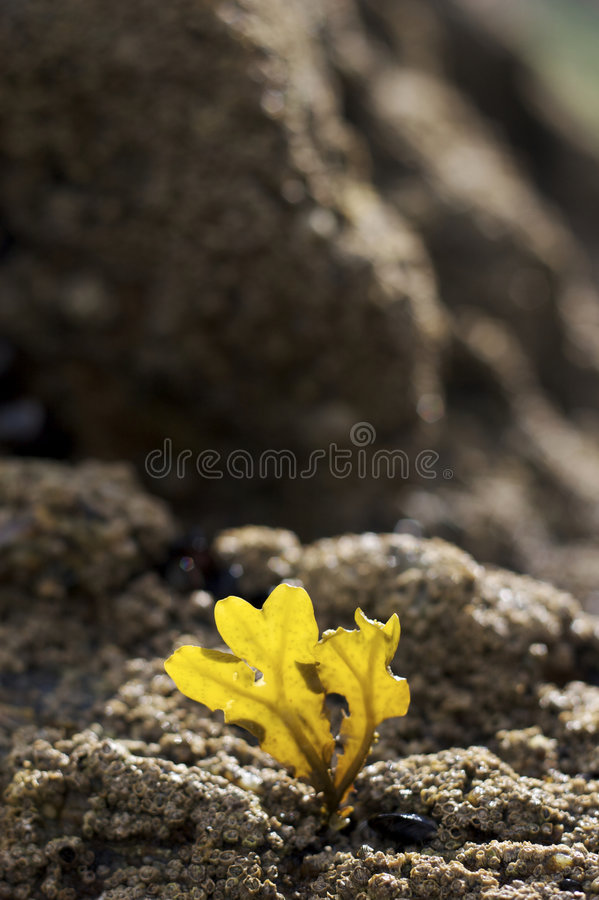 Fotosintesi delle alghe immagine stock