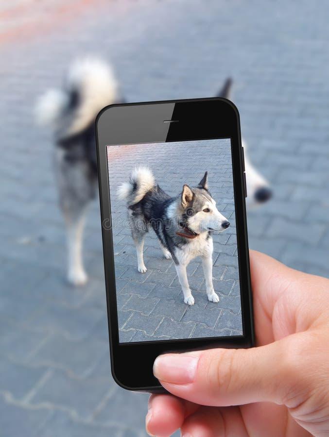 Fotosjälvhund royaltyfria foton