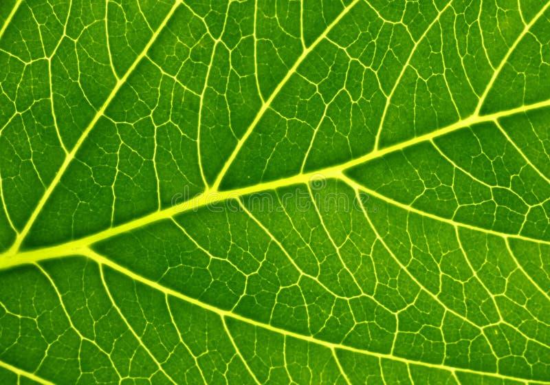 Fotosynthese lizenzfreie stockfotos