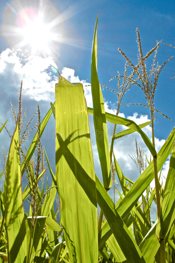 Fotosynthese en de Groei royalty-vrije stock afbeelding