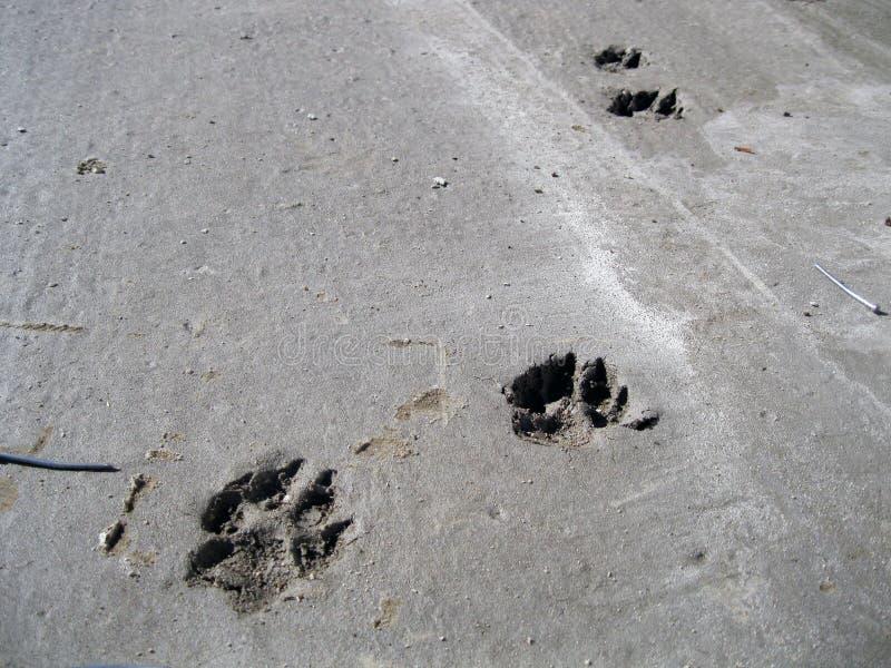 Fotspår i cement. royaltyfri fotografi