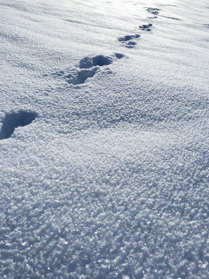 Fotspår i det insnöat berget arkivbilder