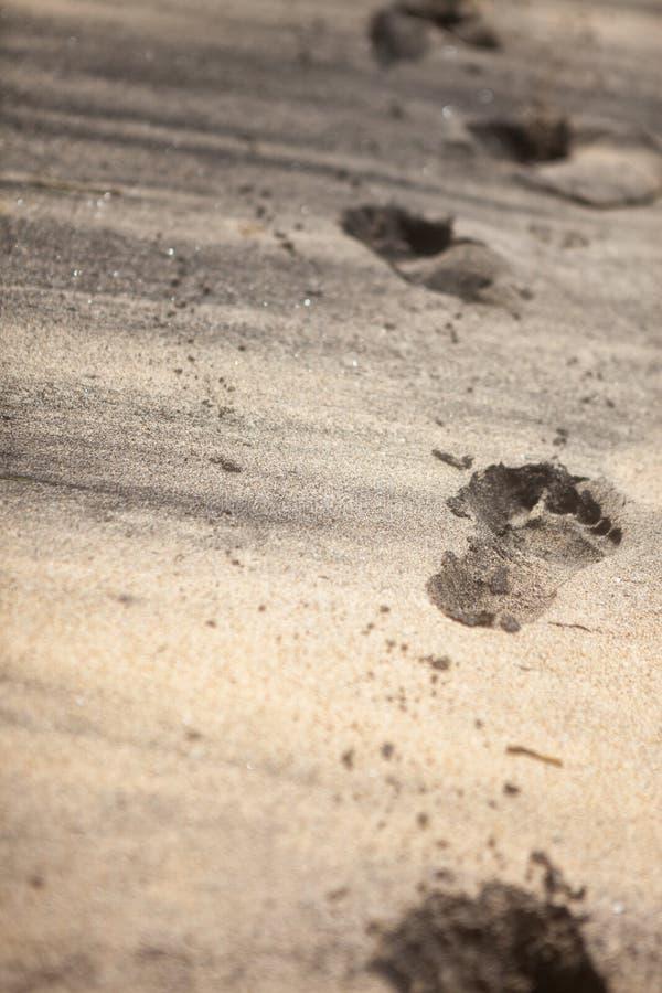 Fotspår i sand arkivfoton