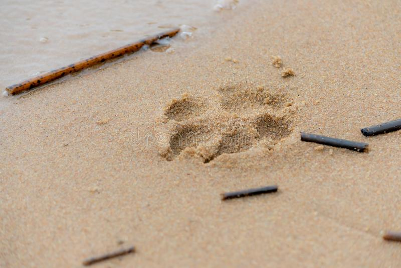 Fotspår i sanden royaltyfri fotografi