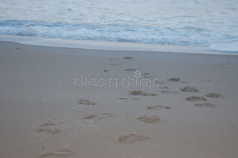 Fotspår i sanden in mot havet arkivbild