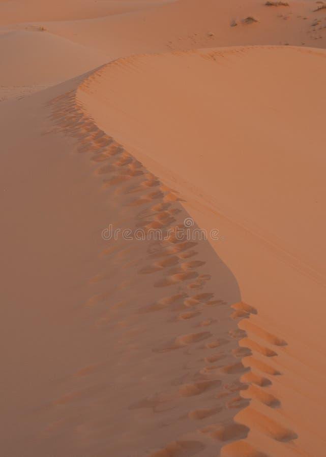 Fotspår på sandöken royaltyfri bild