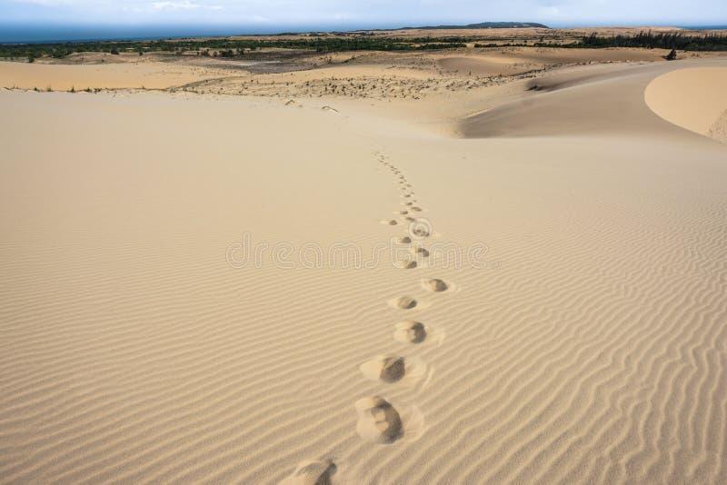 Fotspår på sanddynen royaltyfri foto