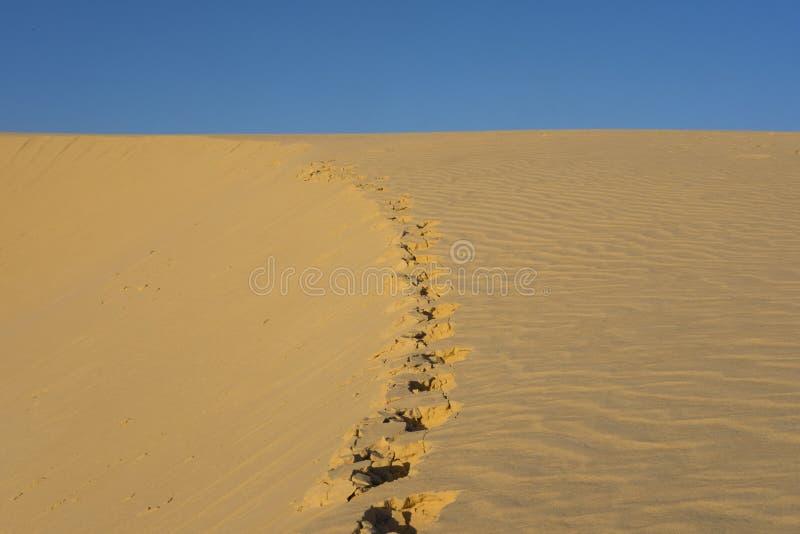 Fotspår på sanden på en dyn i den Sahara öknen arkivfoton