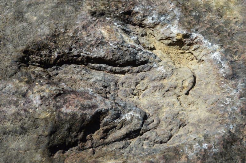 Fotspårdinosaurier royaltyfria bilder