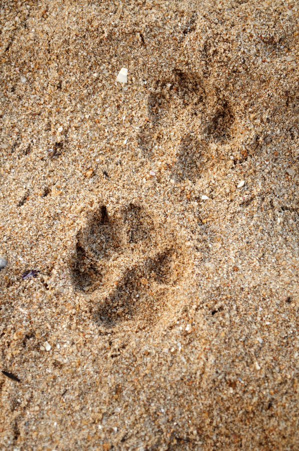 fotspårhusdjur royaltyfria bilder