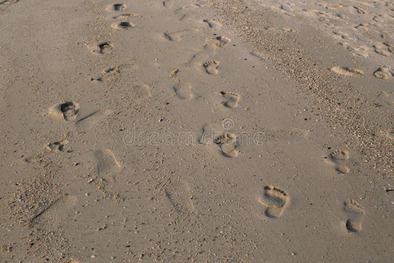 Fotsp?r i sanden p? stranden royaltyfri fotografi