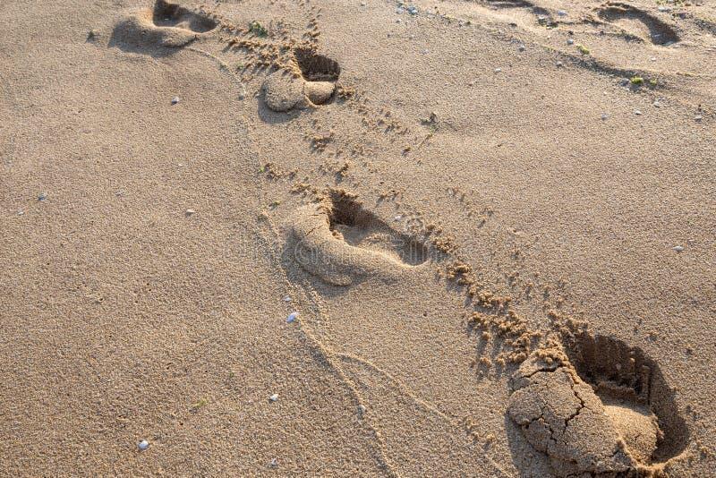 fotsp?r sand v?tt royaltyfria foton