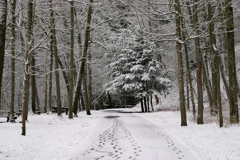 Fotsteg i den nytt stupade snön arkivfoto