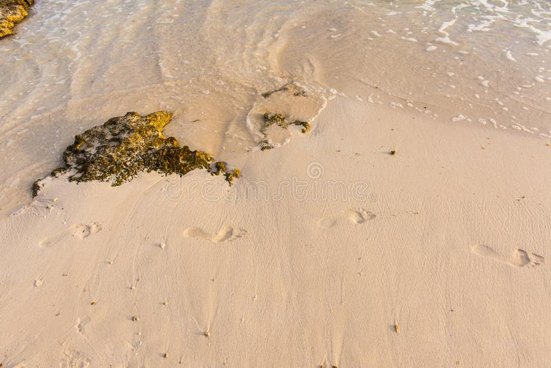 Fotsteg i den våta sanden royaltyfria bilder