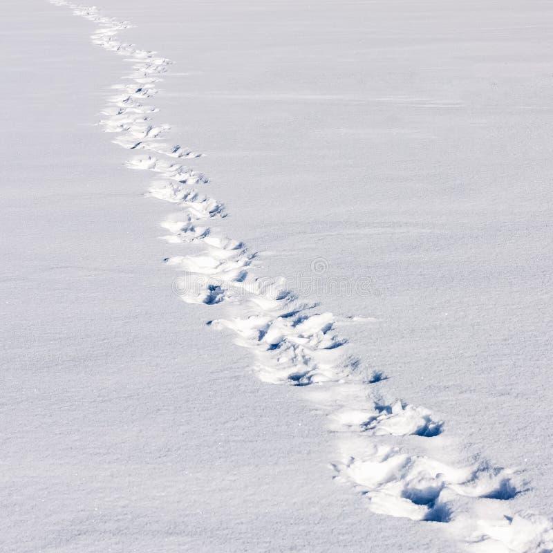 Fotsteg på snön royaltyfria bilder