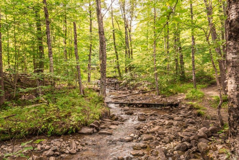 Fotvandra bana`-Les Ruisseaux ` i Mont-Tremblant royaltyfria foton