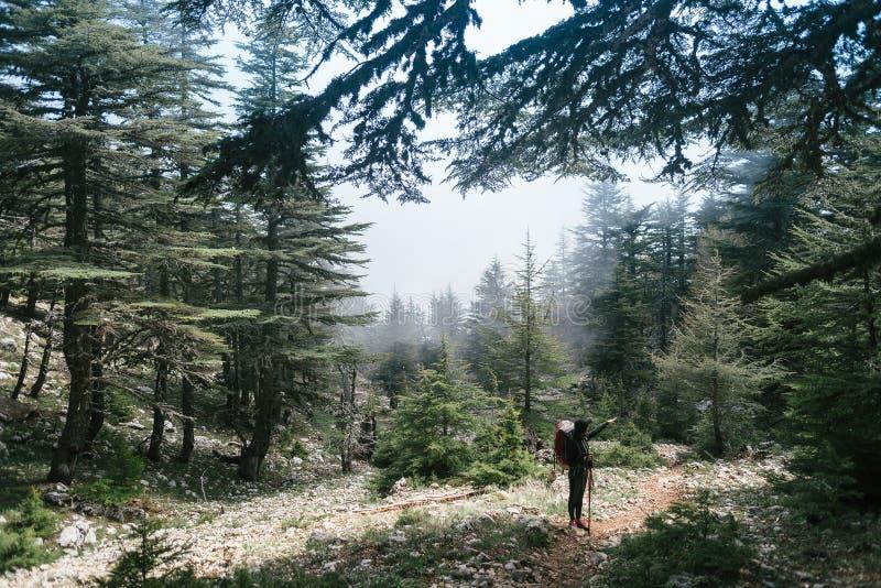 fotvandra berg En kvinnaställning nära av gröna träd i berg vila för flicka royaltyfri bild