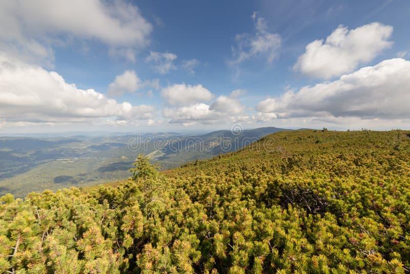Fotvandra bergslingan till och med forested maxima, Beskid berg i Polen brett vinkellandskap royaltyfria foton