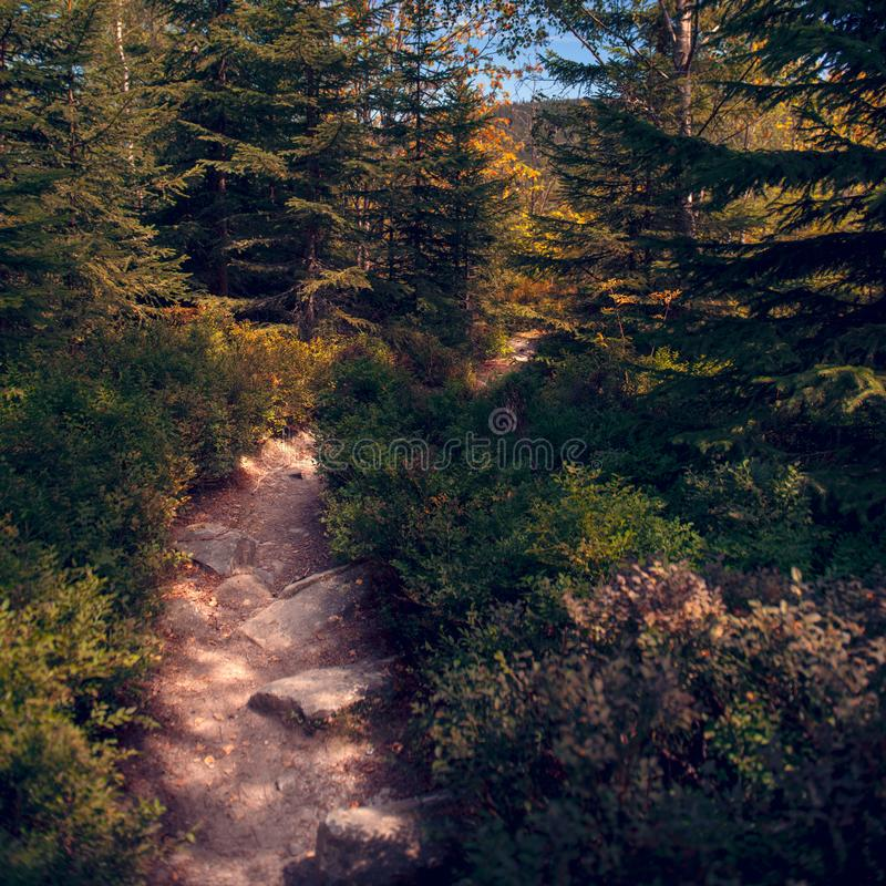 Fotvandra den ledande ho för slinga den härliga bohemmet Forest National Park Trekking- och affärsföretagbegrepp arkivbilder