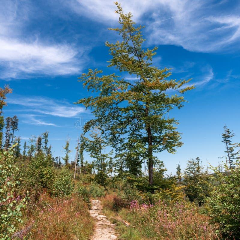 Fotvandra den ledande ho för slinga den härliga bohemmet Forest National Park Trekking- och affärsföretagbegrepp royaltyfria foton