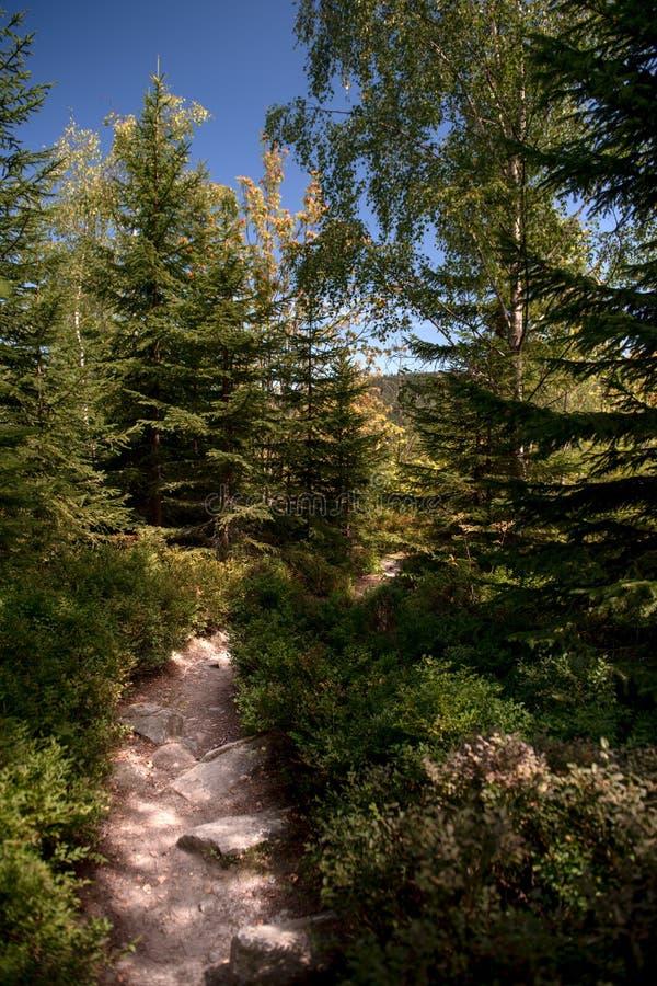 Fotvandra den ledande ho för slinga den härliga bohemmet Forest National Park Trekking- och affärsföretagbegrepp arkivfoton