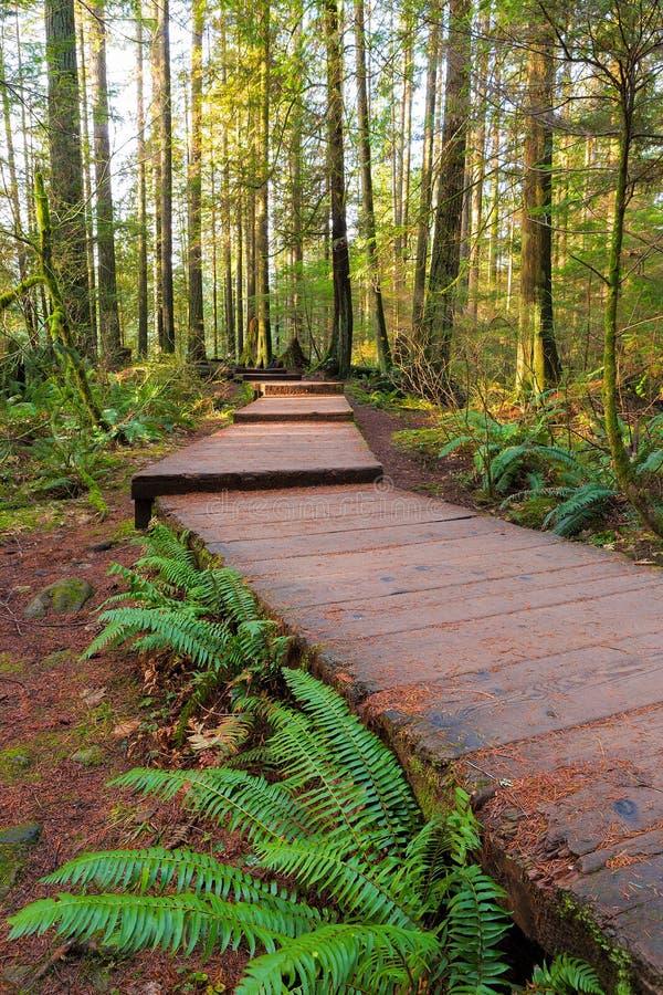 Fotvandra den Wood gångbanan för slinga i Lynn Canyon Park i Vancouver F. KR. Kanada arkivbild