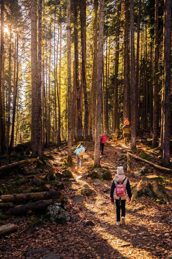 fotvandra för skog arkivbilder