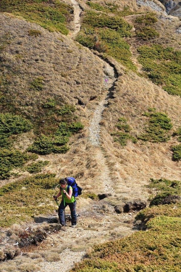 Fotvandra i Ciucas berg royaltyfri foto