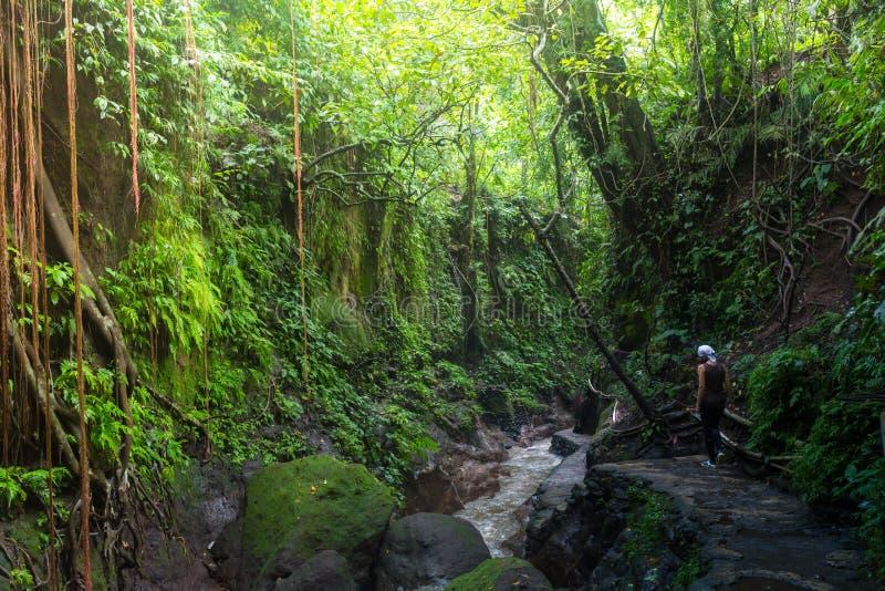 Fotvandra i djungeln: en attraktiv ung europeisk turist- flicka som korsar en fot- upphängningbro för bambu över a royaltyfri foto