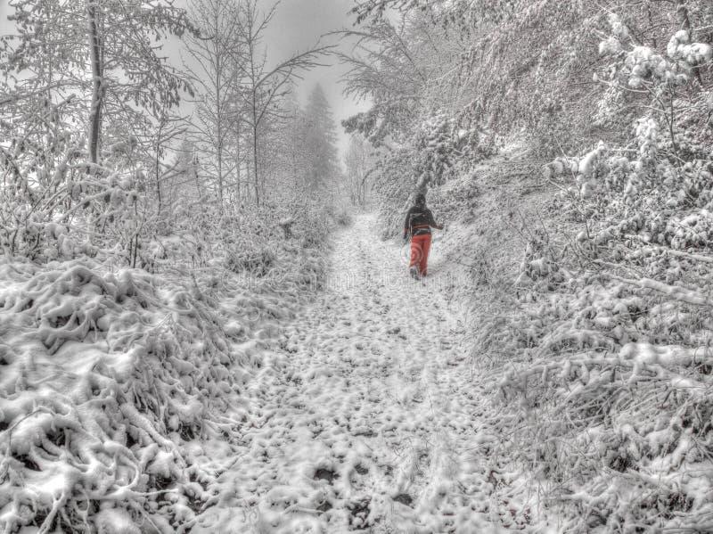 Fotvandra i en snöstorm arkivbild