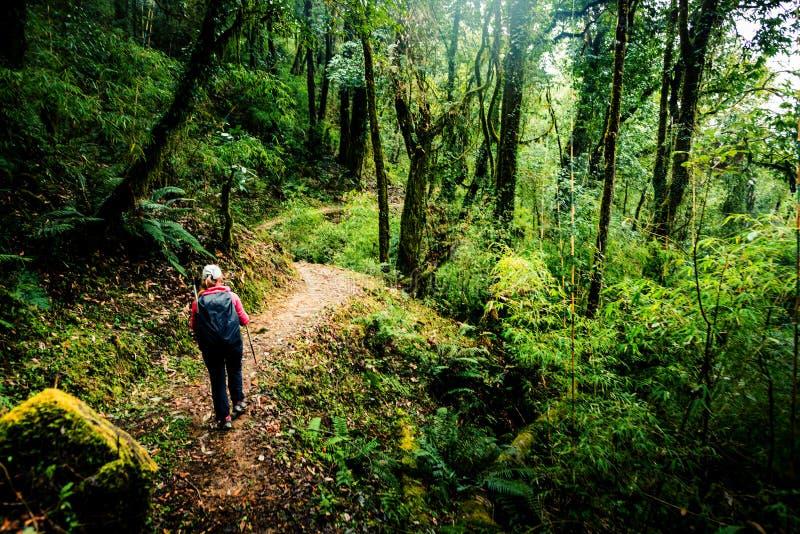 Fotvandra i Nepal djungelskog royaltyfri fotografi