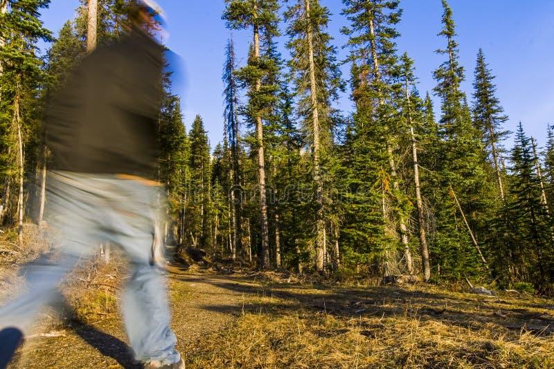 Fotvandra i vildmark av den Banff nationalparken royaltyfria foton