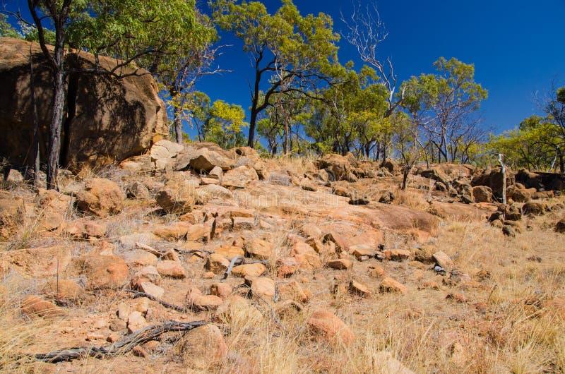 Fotvandra i vildmarken, Queensland, Australien royaltyfri bild