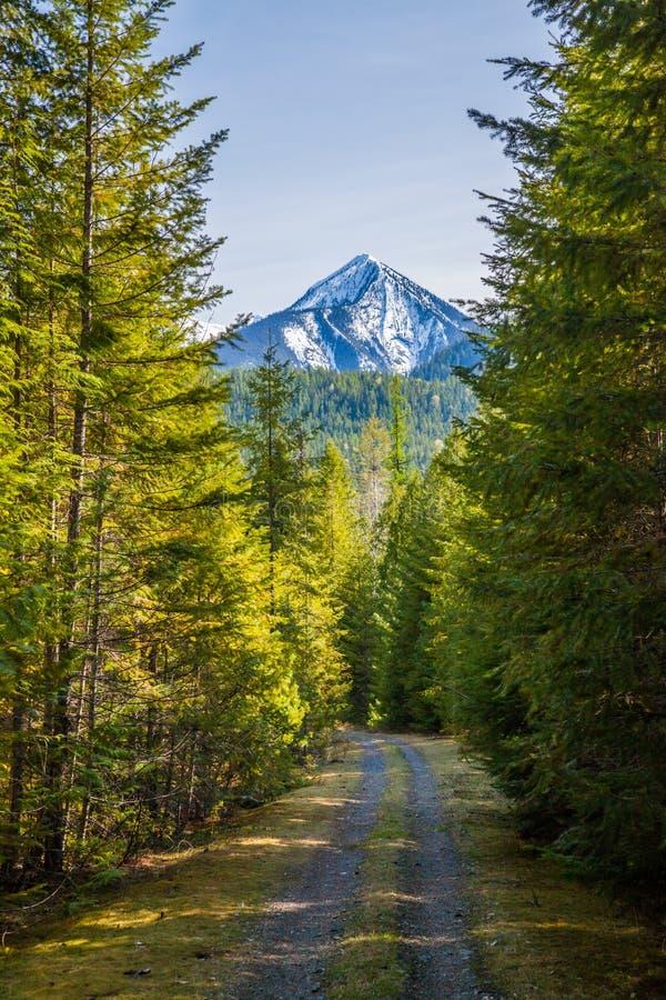 Fotvandra och ett berg som cyklar slingan nära Slocan sjön i British Columbia arkivbild
