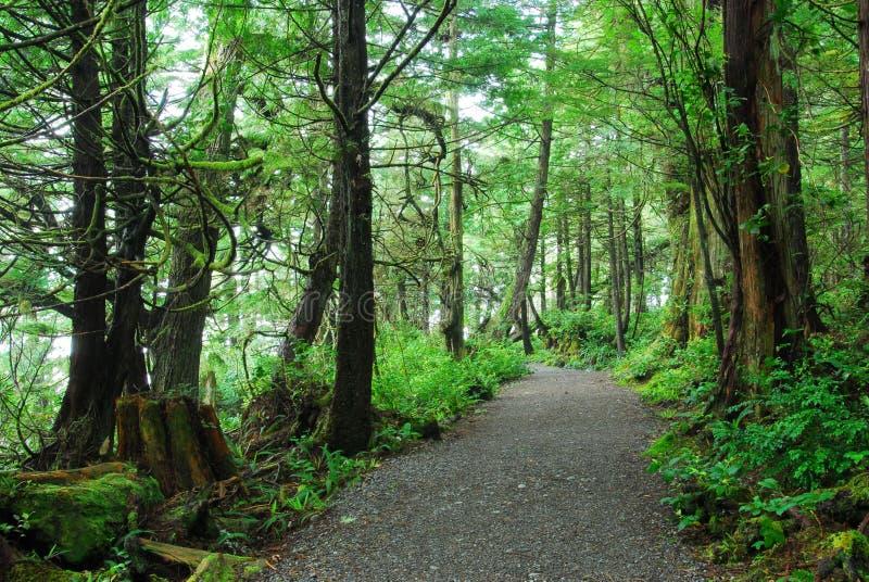fotvandra regntrail för skog royaltyfri foto