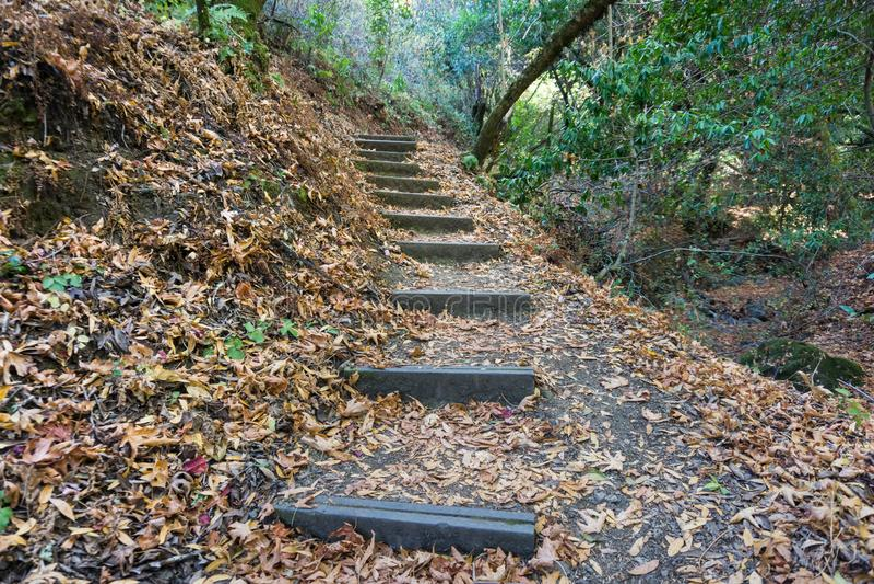 Fotvandra slinga i Palo Alto Foothills Park royaltyfri foto