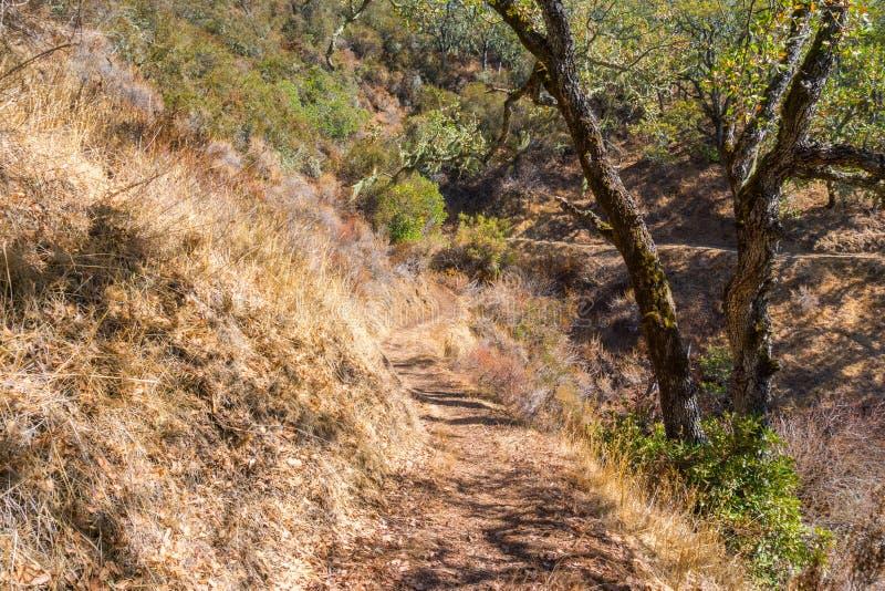 Fotvandra slinga i Palo Alto Foothills Park fotografering för bildbyråer