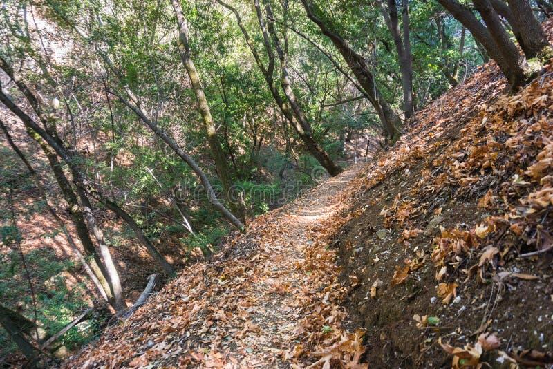 Fotvandra slinga till och med en av skogarna av Palo Alto Foothills P royaltyfri bild