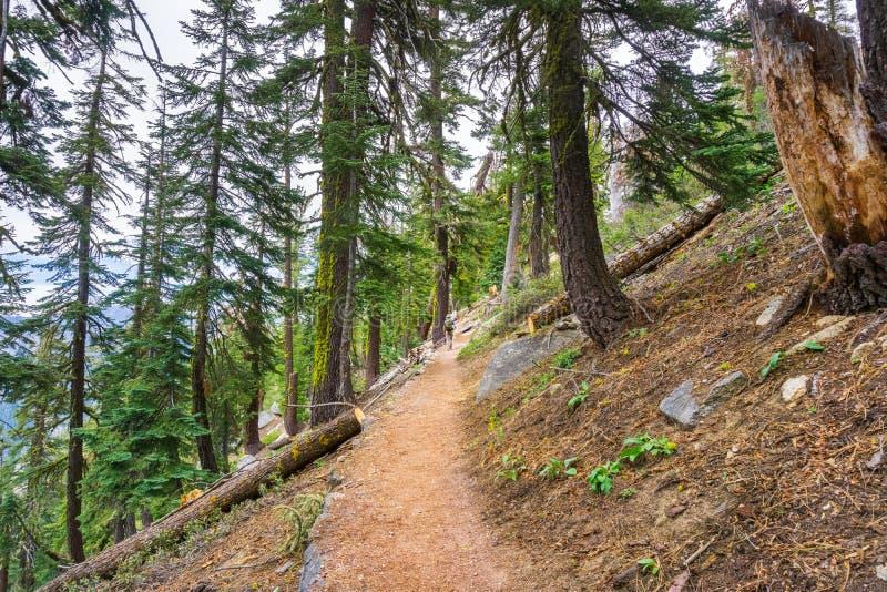 Fotvandra slinga till och med skogarna av den Yosemite nationalparken, Sierra Nevada berg, Kalifornien royaltyfria bilder